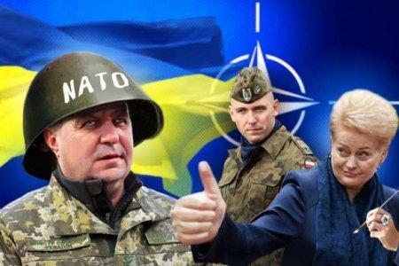 Украина в опасности: Зеленский требует от НАТО «не смотреть в бинокль»