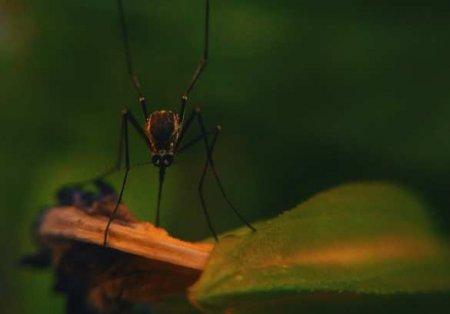 Долетают до 19 этажа: что сделала аномальная жара с российскими комарами