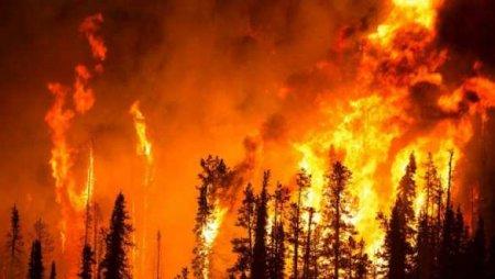 Турция: стена огня подошла к отелям, начата эвакуация (ФОТО, ВИДЕО)