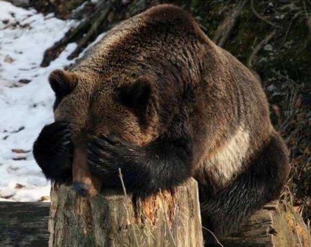 Медведь жевидит, чтоэтоПутин: обезопасности президента наотдыхе втайге (ВИДЕО)