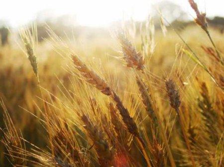 Минсельхоз России отдаст Узбекистану варенду миллион гектаров земли