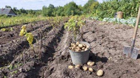 Украинские школьники вместо уроков копают картошку (ВИДЕО)